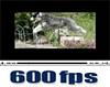 600fpsムービー